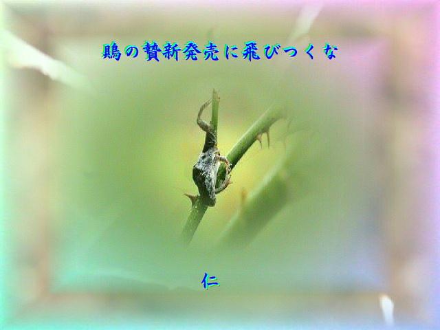 フォト575qq2607『 鵙の贄新発売に飛びつくな 』