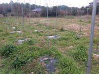 福岡の葡萄栽培農家を訪ねて