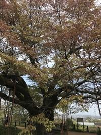 浅井の一本桜2018【その七】