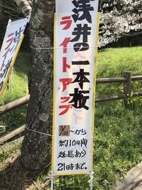 浅井の一本桜2018【その壱】
