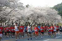 2013慶州さくらマラソン