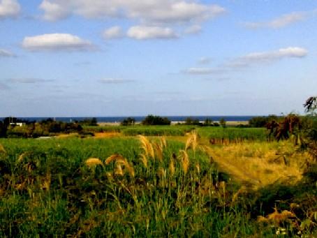 畑&海の幸