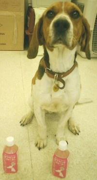 検疫探知犬のベンとルーイです