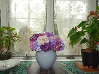 紫陽花の季節 歯の衛生週間