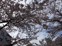 4月のお休み☆