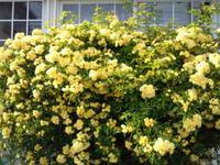 母の花壇☆