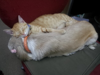 ★アズリードに子猫・・・・・・・