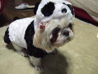 ★パンダの散歩~???