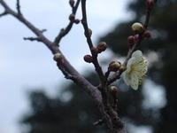 春の便り・・・