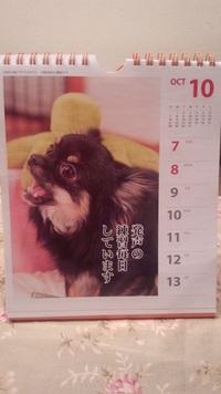 チワワ川柳カレンダー♪