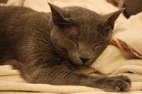 「この毛布、使ってよか?」 2009/03/16 07:06:00